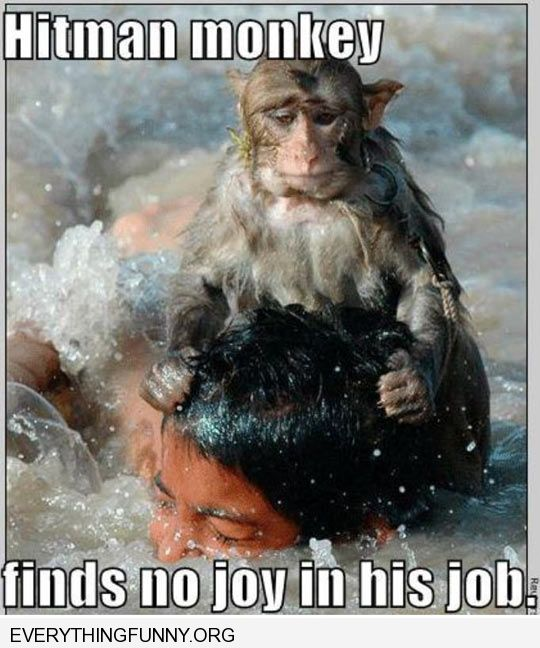 funny caption hitman monkey finds no joy in his job holding mans head in water