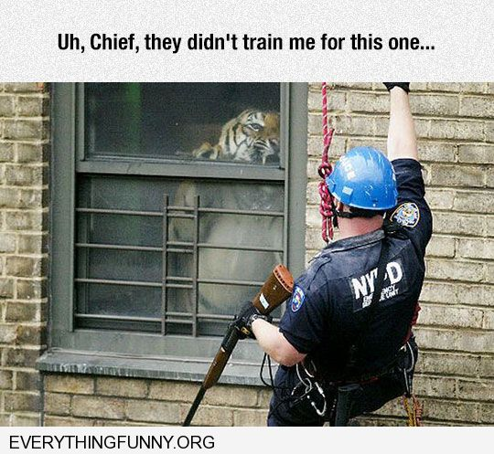 funny caption polic officer comes across tiger uh chief they didn't train me for this one