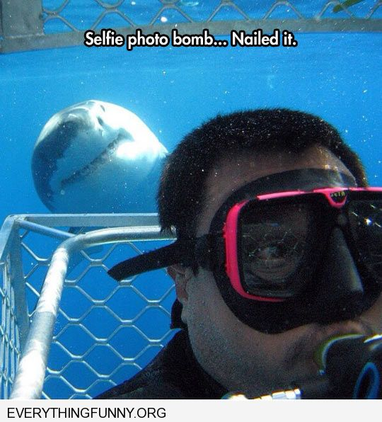 funny awesome selfie photo bomb by shark humor sites like collegehumor