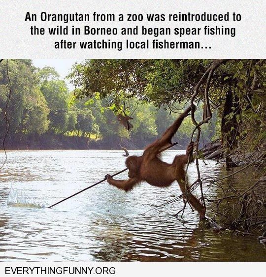 funny monkey learns to fish by watching man