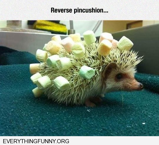 funny porcupine covered in marshmallows
