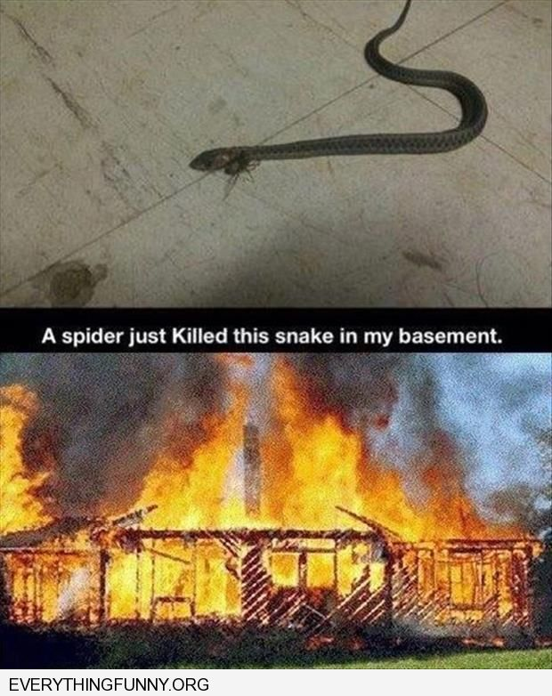 funny caption this spider just killed this snake in my basement burn the whole house down