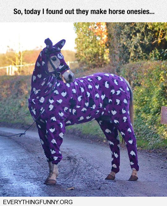 funny caption today i found out they make horse onesies