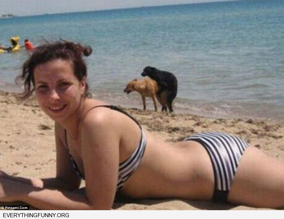 funny dogs mating background photobomb great photobombs