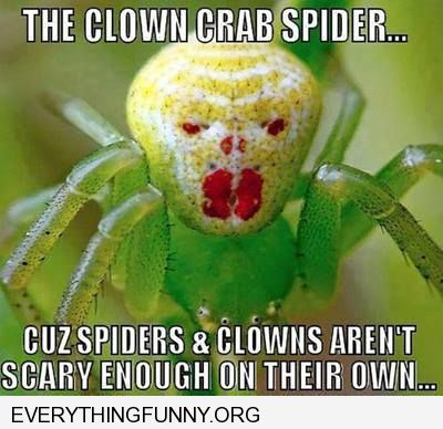 funny caption clown spider because spiders and clowns aren't scary enough on their own