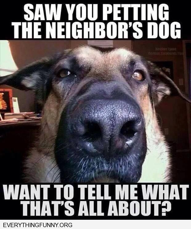 funny dog pictures saw you petting the neighbors dog what to tell me what that's all about