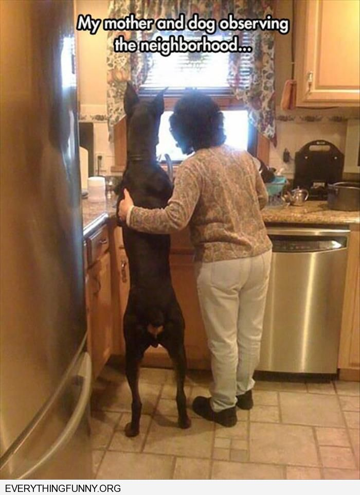 funny caption mom and doberman dog standng on hindlegs looking out window checking out the neighborhood