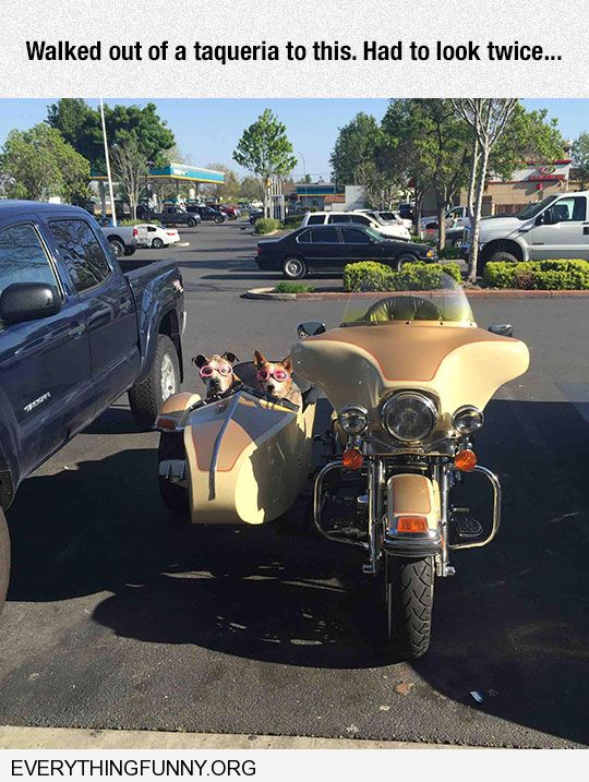 funny caption two dogs motorcycle side car