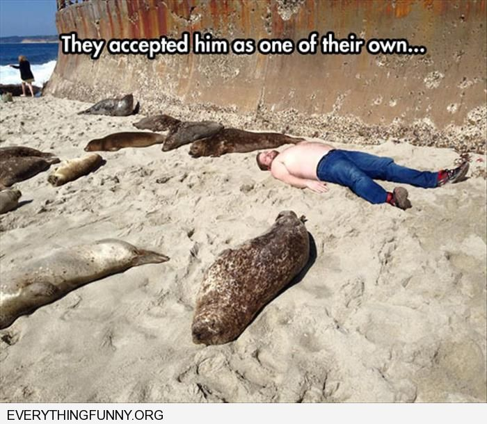 funny caption man lying with seals they have accepted him as one of their own