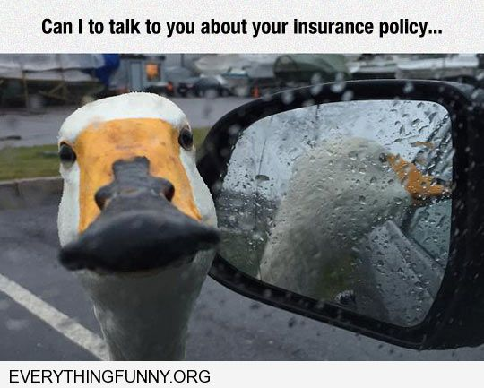 funny duck caption can i talk to you about your insurance