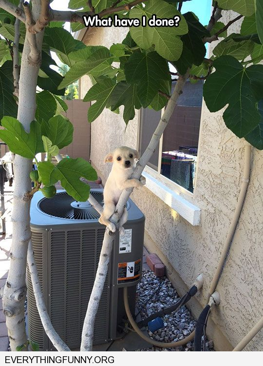funny dog picture puppy gets stuck climbing tree what have i done
