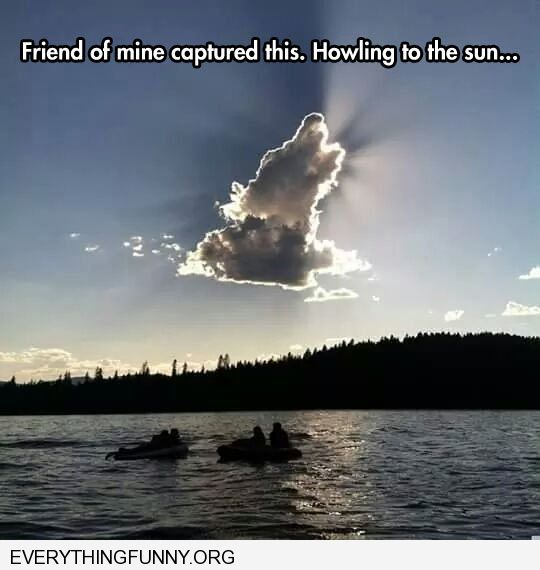 funny caption awesome clouds look like howling wolf dog