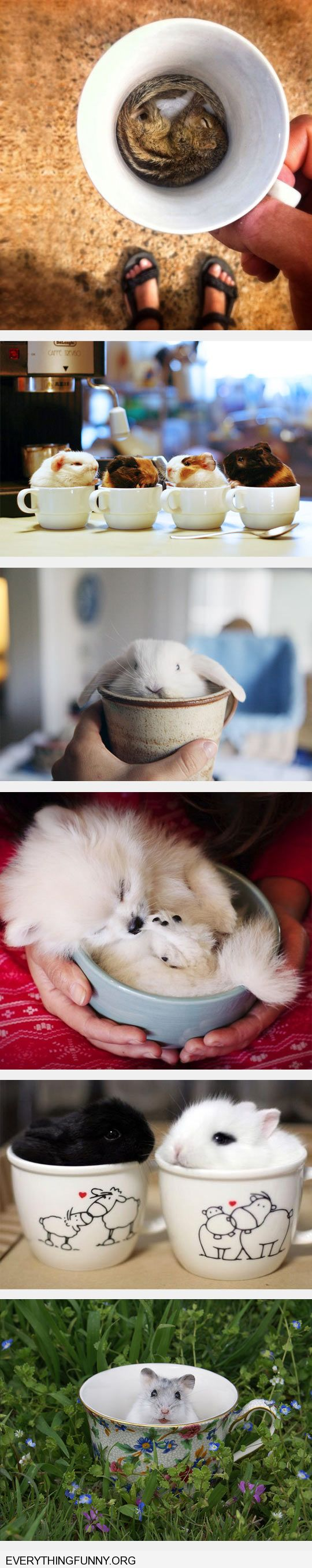 funny caption adorable animals in tiny cups