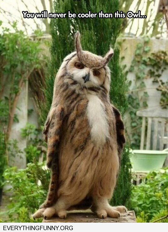 funny you will never be cooler than this owl