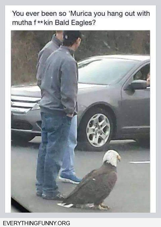 funny caption ever been so 'murica that you hang out with a bald eagle