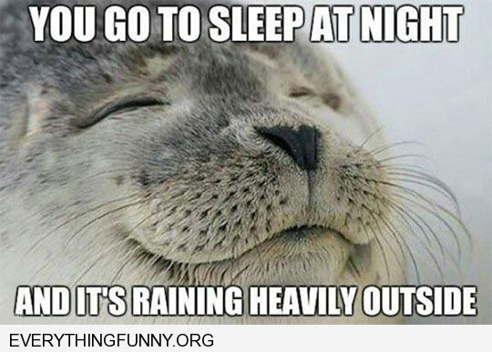 funny content seal when you go to sleep at night and its raining heavily outside