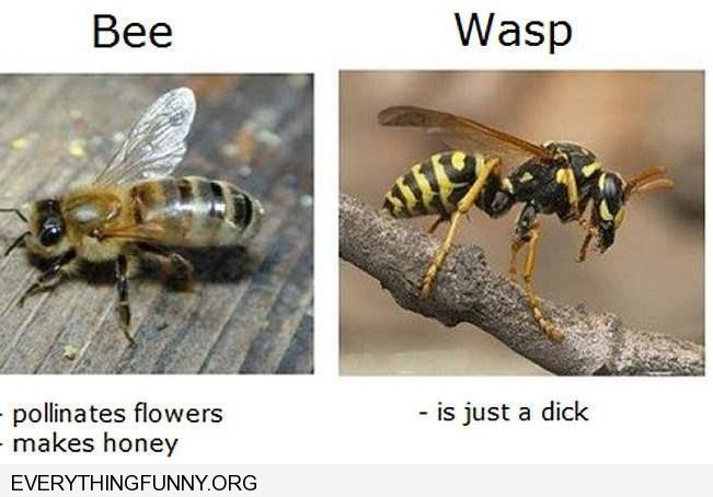 funny caption bee pollinates flowers makes honey wasp is just a dick