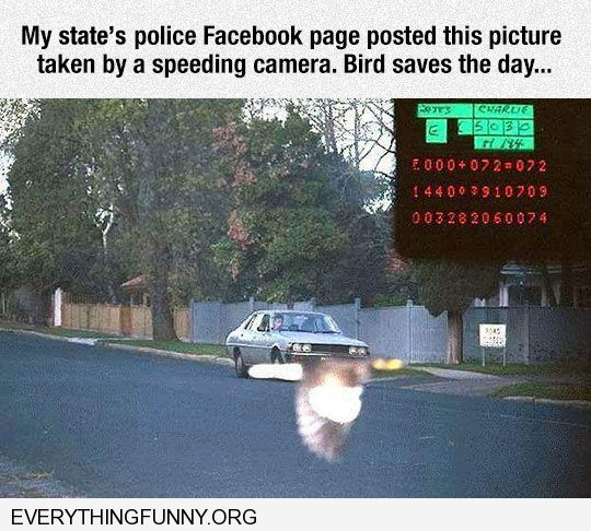 funny perfectly timed photo bird flies in front of speeding camera covering license plate exactly right moment
