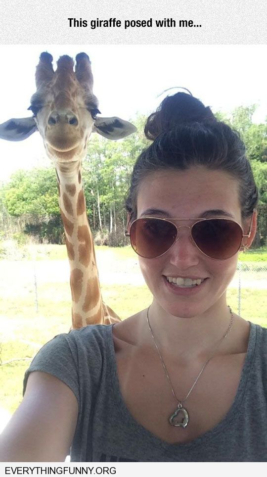 funny sweet smiling giraffe photobombs picture