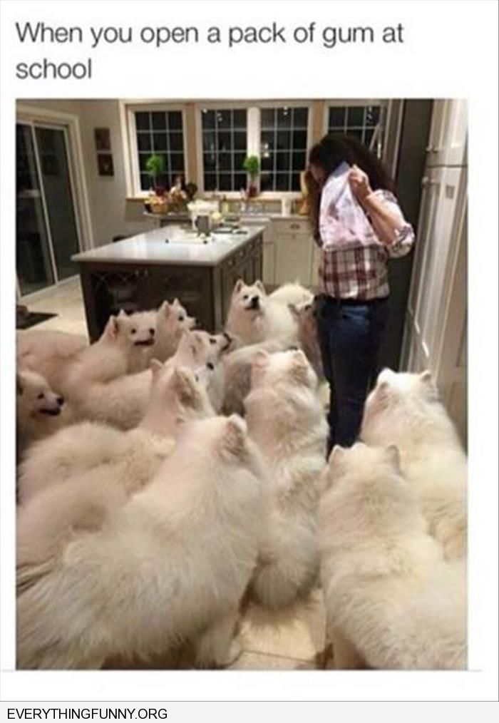 funny caption woman surrounded by dogs feeding time when you open a pack of gum at school