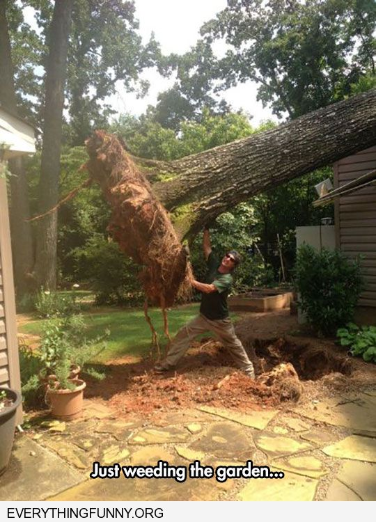 funny caption just weeding the garden man holding huge fallen tree