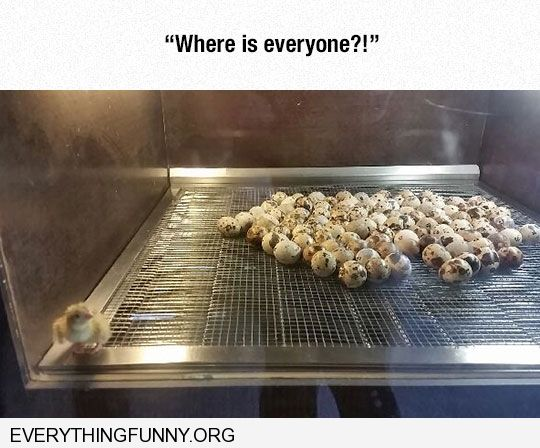 funny captions first chick to hatch where is everyone