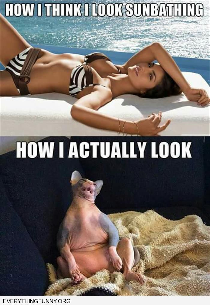 funny caption how i think i look sunbathing how i actually look fat ugly cat sitting up on couch