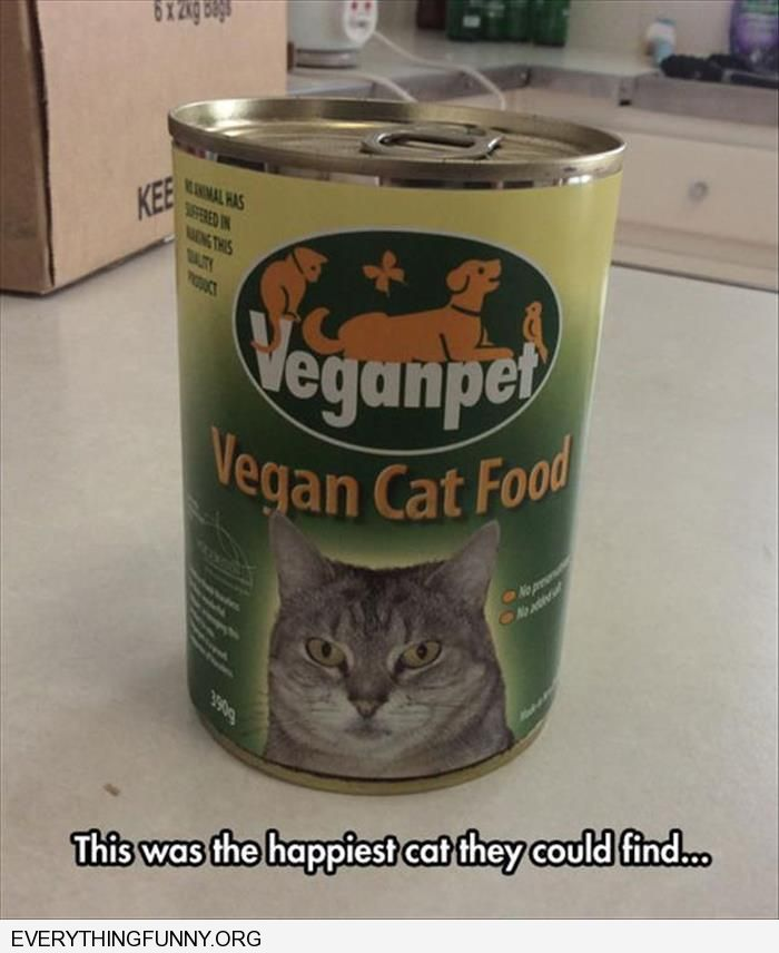 funny vegan cat food this was the happiest cat they could find