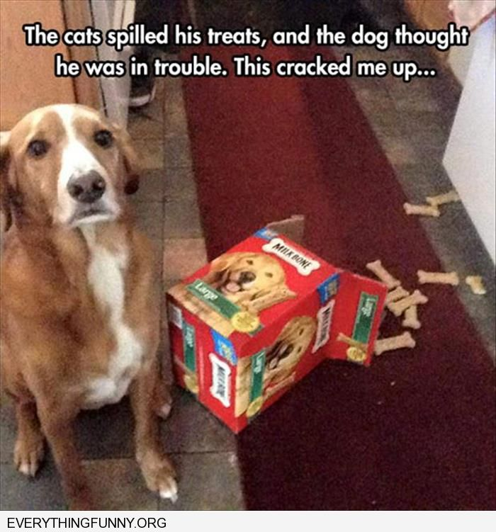funny dog picture cat knocked over dog treats dog thinks he's in trouble guilty