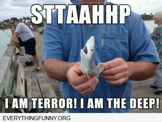 funny baby shark picture sttaahhp i am terror i am the deep