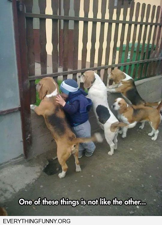 funny caption one of these things is not like the other little boy standing next to dogs looking out fence