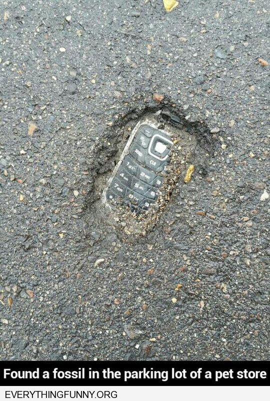 funny nokia phone in cement found a fossil in parking lot