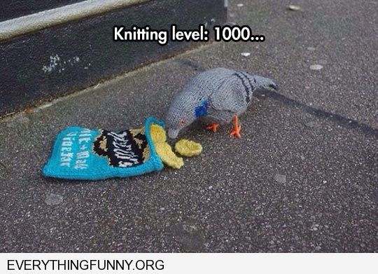 funny knitted crocheted pigeon and snack bag knitting level 1000