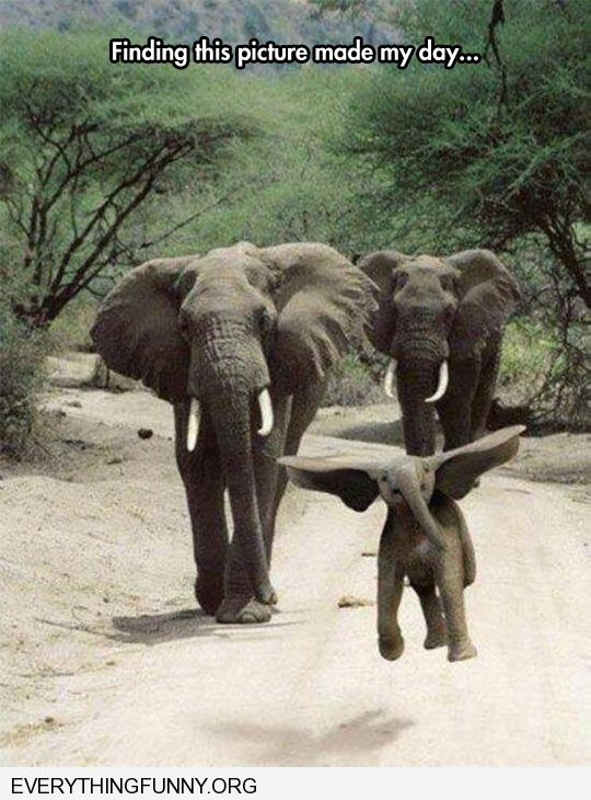 funny perfectly timed photo looks like baby elephant flying little dumbo