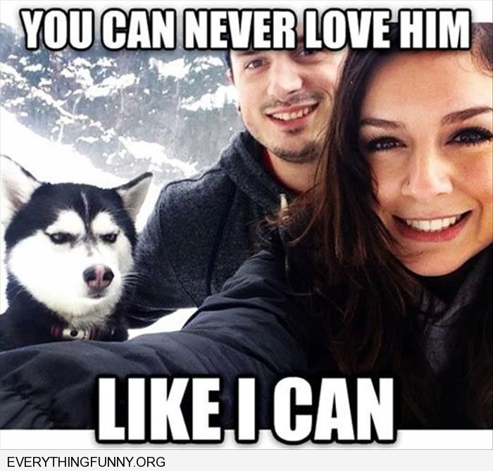 funny caption husky dog giving girlfriend dirty look you can never love him like i can