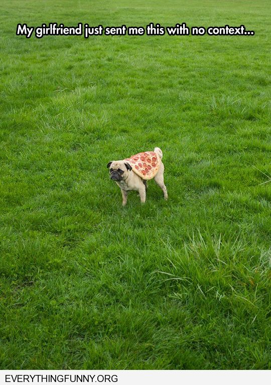 funny caption my girlfriend just sent me this picture with no context pug dog with a pizza on his back
