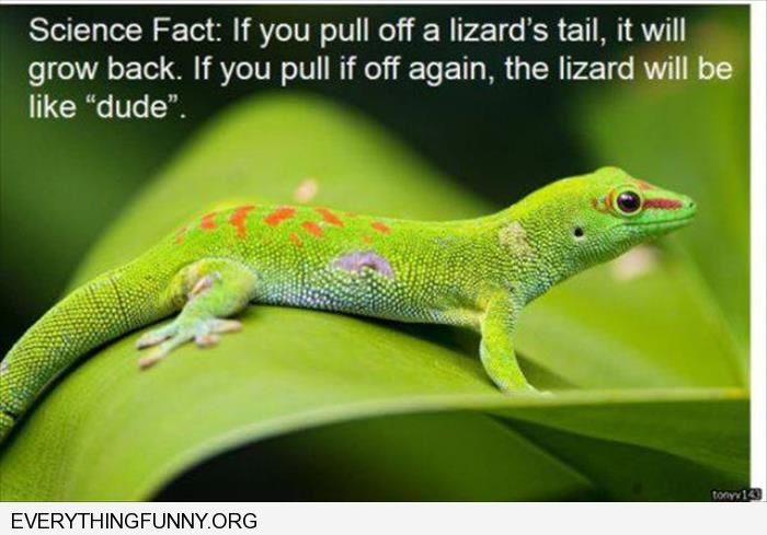 "funny caption if you pull off a lizards tail it will grow back second time lizard will be like ""dude"""