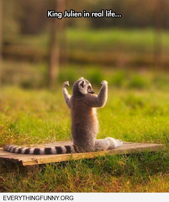 funny caption king julien in real life