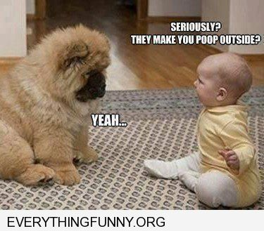 funny baby dog caption seriously they make you poop outside yes