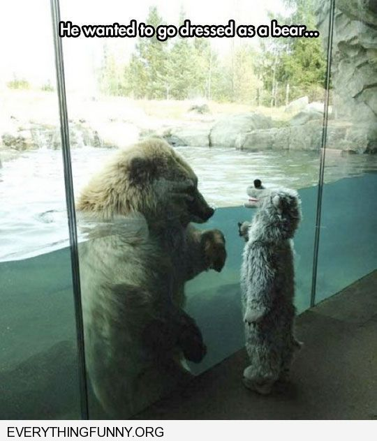 funny caption little boy wears bear costume to zoo catches polar bears attenion confused
