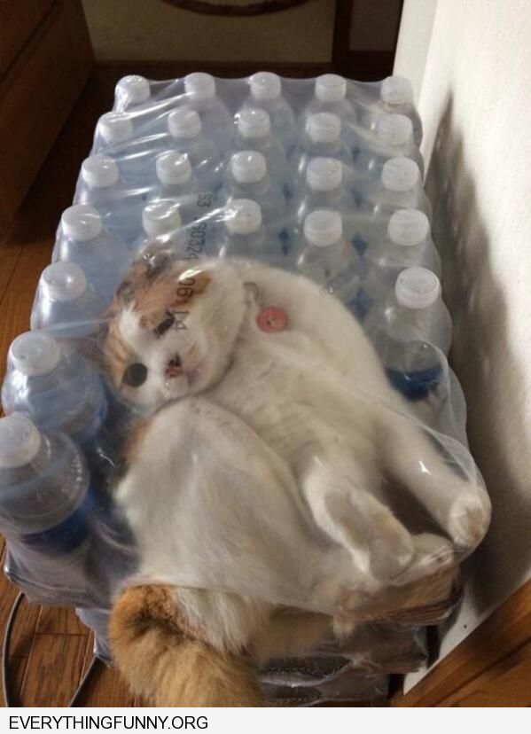 funny cat pictures cat stuck in water bottle package