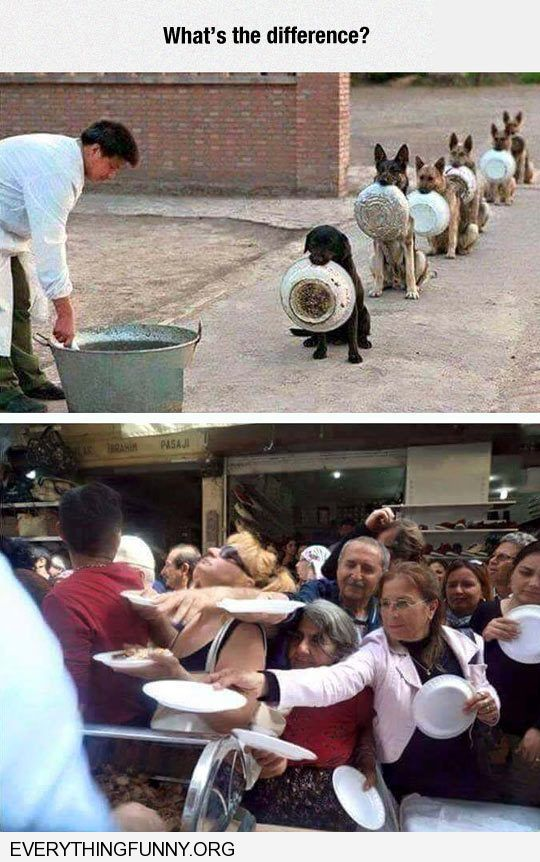 funny caption the difference between animals and people standing on line for food