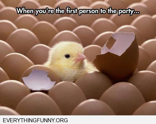 funny caption first baby chick to hatch when you are the first one at a party