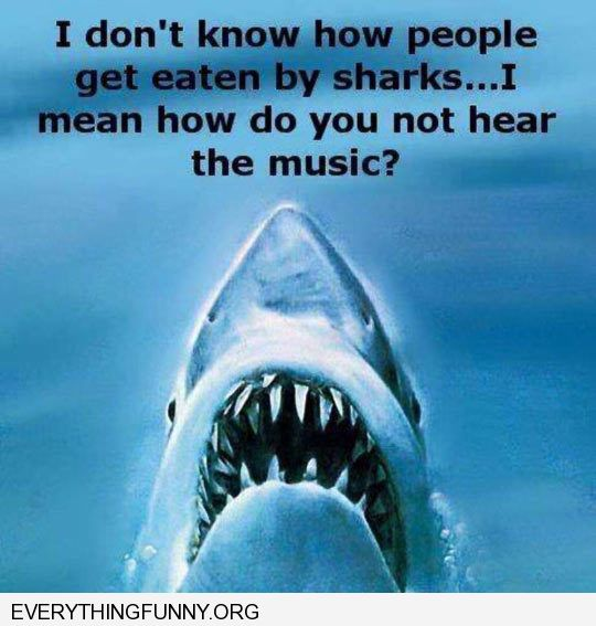 funny capiton i don't know how people get eaten by sharks don't they hear the music