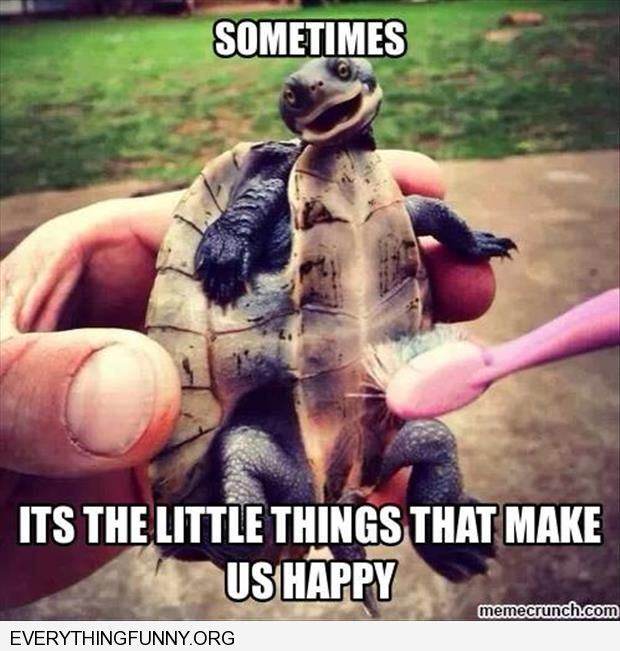 funny caption smiling turtle as he gets rubbed by toothbrush