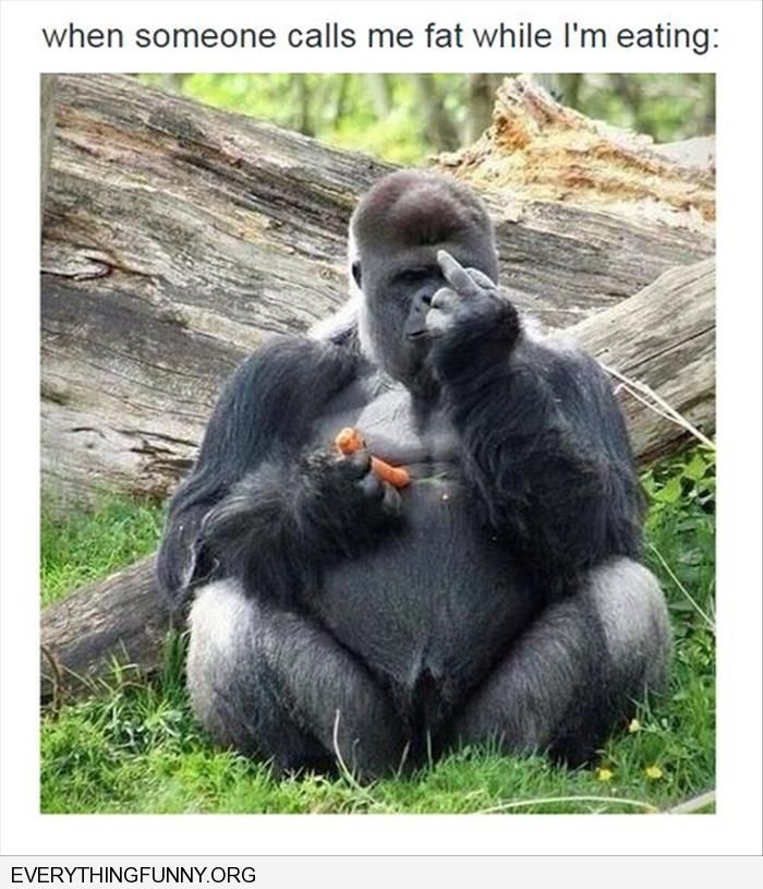 funny when people call me fat when i'm eating gorilla giving the finger
