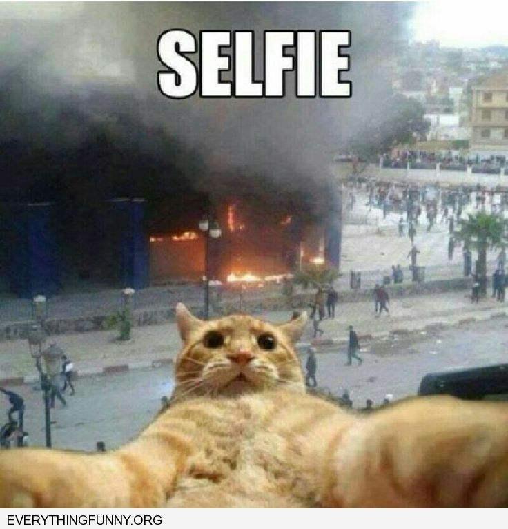 funny cat pictures looks like cat taking selphie in front of fire