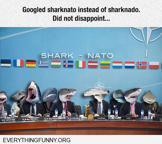 funny google searches searched sharknato instead of sharknado was not disappointed