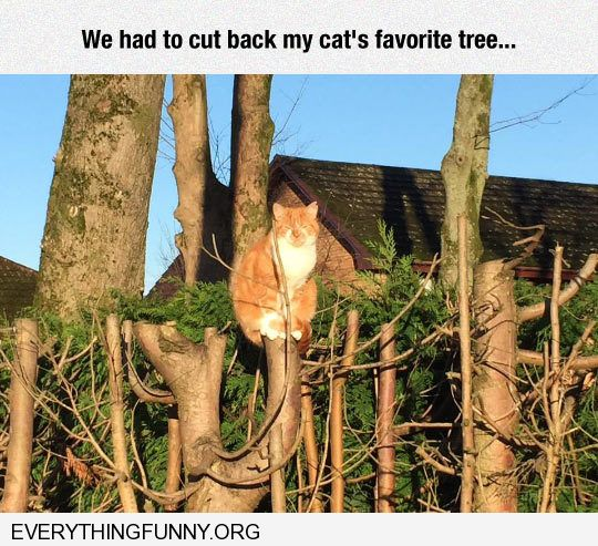 funny angry cat pissed off cat sits on remains of tree that needed to be cut back