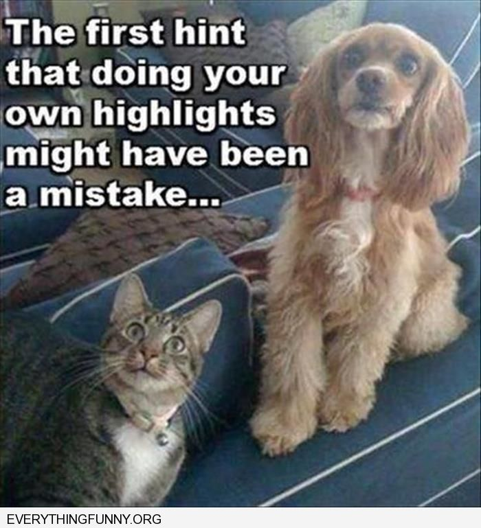 funny cat and dog looked shocked the first hint that doing your own highlights might have been a mistake